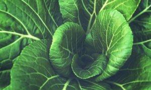 Una foglia di spinacio, una carica di folati!